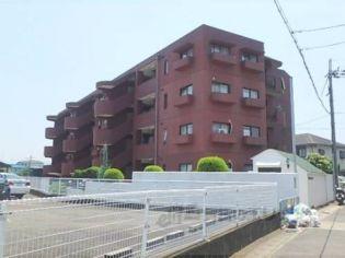 嵯峨野ロイヤルハイツ[406号室]の外観